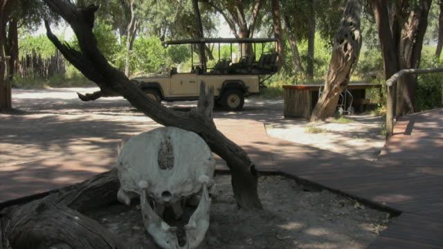 ms, animal skull and safari off-road vehicle at safari camp entrance, botswana - animal skull stock videos and b-roll footage