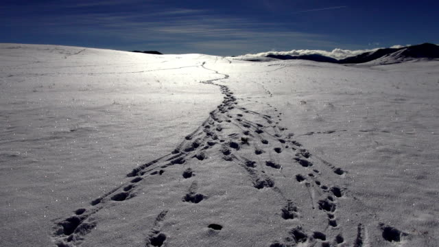 pov of animal tracks on sparkling snow covered prairie landscape with mountains in background. - track imprint stock videos and b-roll footage