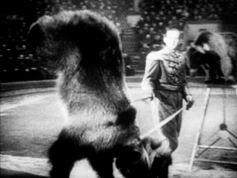 CIRCUS Animal trainer in costume w/ bear doing tricks on leash walking on front feet on back turning drum w/ paws riding bicycle Angled WS Audience...