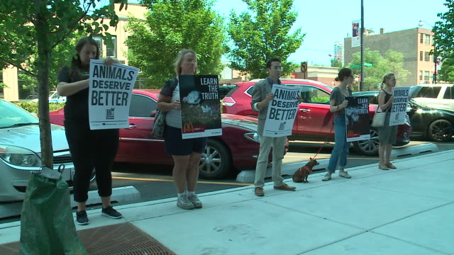 wgn animal welfare advocates protested on july 24 outside mcdonald's new headquarters in chicago's west loop where they delivered a petition with... - animal welfare stock videos and b-roll footage