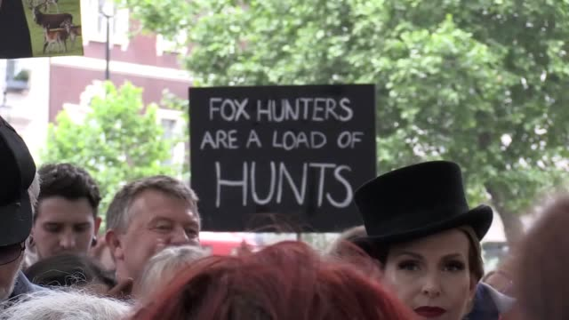 vidéos et rushes de animal welfare campaigner bill oddie has said it is ridiculous that fox hunting has been put back on the agenda as hundreds of demonstrators marched... - bill oddie
