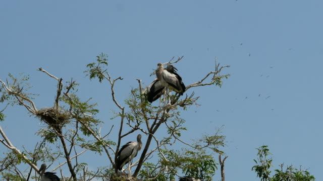 animal worldwide ,  Freshwater Bird on treetop
