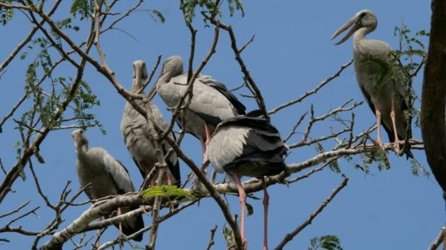 Tier weltweit, Süßwasser Vogel auf Baumkrone
