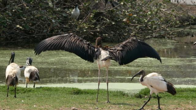 animal worldwide ,  Freshwater Bird