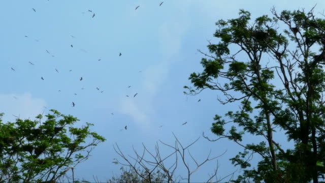 animal worldwide , Large Group Of bird flying over treetop