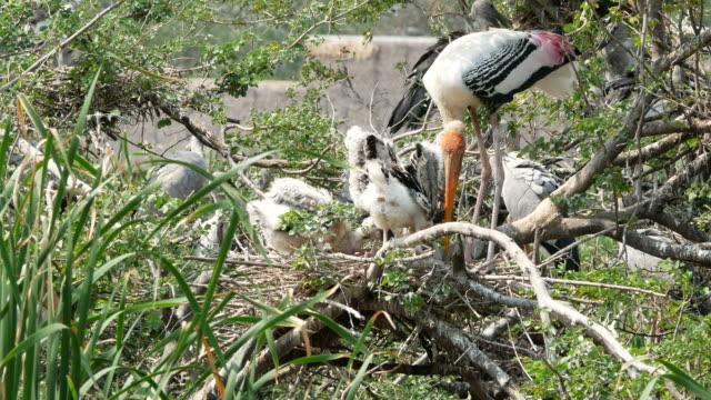 animal worldwide ,  nest of Bird on tree