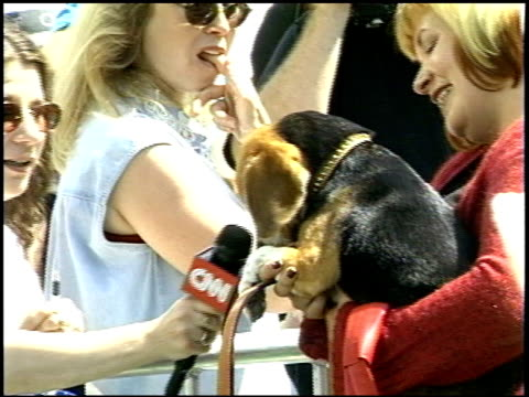 animal/animals at the 'cats and dogs' premiere at the mann village theatre in westwood california on june 23 2001 - レジェンシービレッジシアター点の映像素材/bロール