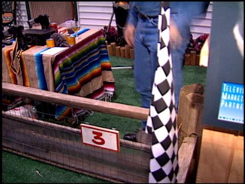 animal/animals at the natpe convention on january 20 1998 - natpe convention bildbanksvideor och videomaterial från bakom kulisserna