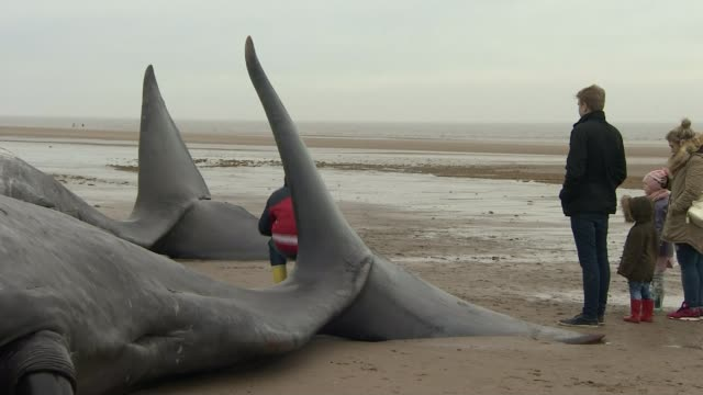Animals 400 whales beached on New Zealand's South Island NEW ZEALAND / ENVIRONMENT Animals 400 whales beached on New Zealand's South Island LIB /...