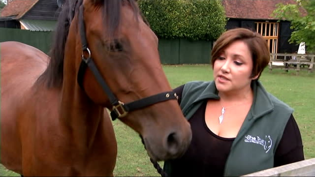 abandoned and emaciated horse makes full recovery jeanette allen leads polly along through paddock and interview sot reporter to camera polly grazing... - ausgemergelt stock-videos und b-roll-filmmaterial
