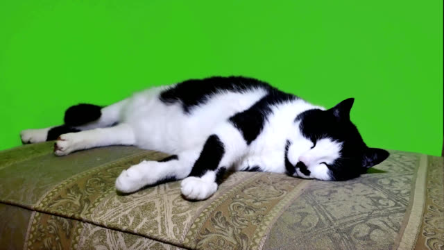 Animals Against Green Screen