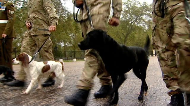 animals army sniffer dog 'theo' awarded posthumouse medal for courage england london wellington barracks ext british troops / british soldiers... - explosive stock videos & royalty-free footage