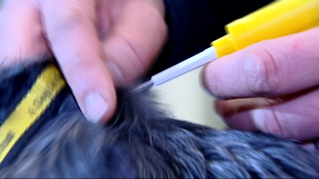dogs in england must be microchipped from 2016 gvs dog microchipped and owen paterson interview microchip being scanned / close shots of microchip... - owen paterson stock videos and b-roll footage