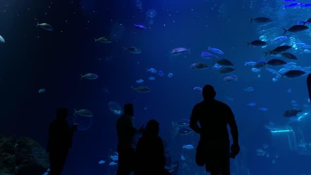 animals fish jellyfish variety aquarium turtles life under the sea nature preservation defense animals educational sustainability preserve the environment - aquatic organism stock videos & royalty-free footage