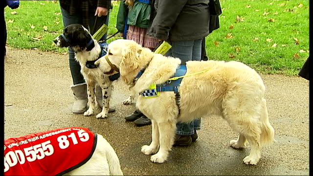 five 'hero dogs' to compete in friends for life final at crufts 2011; england: london: green park: ext photocall with various rescue dogs and owners - five animals stock videos & royalty-free footage