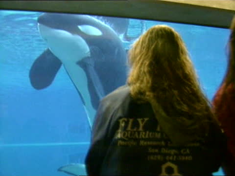 stockvideo's en b-roll-footage met 'free willy' killer whale arrives at new aquarium in oregon; a) nat usa: oregon: newport: ext various of keiko the killer whale being given fish in... - new not politics