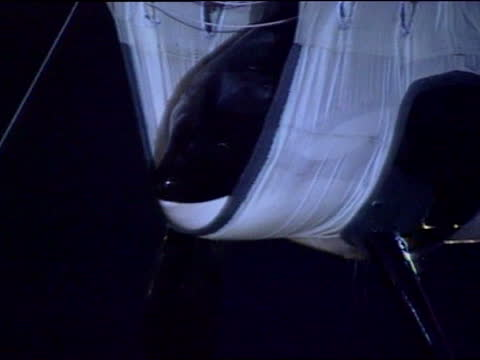stockvideo's en b-roll-footage met 'free willy' killer whale arrives at new aquarium in oregon; usa: oregon: newport: ext at night keiko the killer whale in sling as hoisted from crate... - new not politics