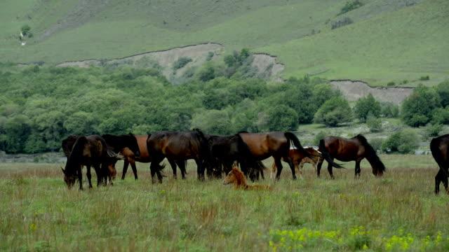 """""""Tiere"""": Pferde Grasen auf der Ebene."""