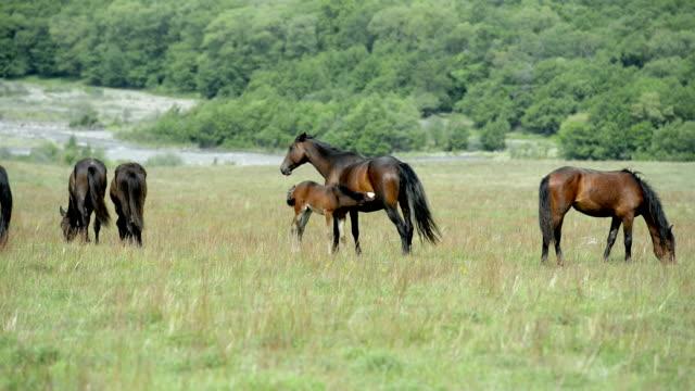 """Tiere"": Pferde. Mare Fohlen feeds."