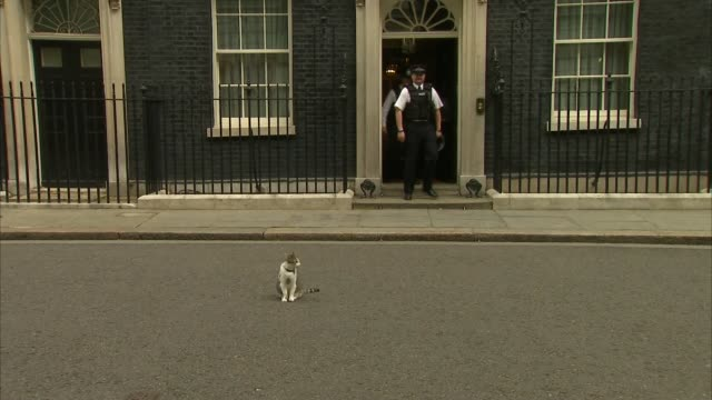 Larry the cat at Downing Street ENGLAND London Downing Street EXT **Third party audio heard in background** Door of Number 10 opening / Larry the cat...