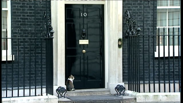 larry the downing street cat; england: london: downing street: ext 'larry' the downing street cat sits on doorstep of number 10 - door opens and he... - 10 downing street stock videos & royalty-free footage