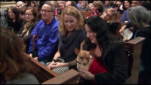 vídeos de stock e filmes b-roll de animals line pews for animal blessings ceremony on december 09, 2012 in new york, new york - benção