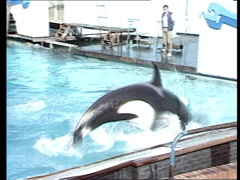 Nemo the killer whale has outgrown his pool but plans for a new one await government decision on keeping whales in captivity ENGLAND Berkshire...