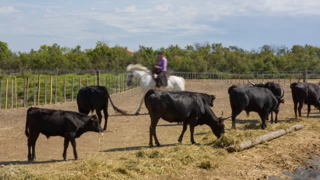 vidéos et rushes de animals of the wild - équitation de loisir