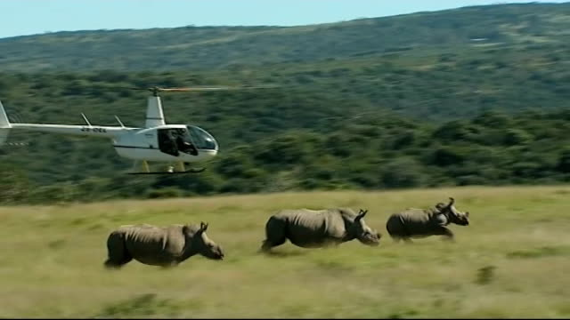 animals: poaching threat to rhono population: rhino orphanage; 5.4.2012 / t05041235 kariega game reserve: team of vets in helicopter following herd... - 鎮静薬点の映像素材/bロール