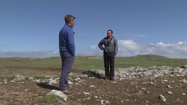 puffin population on island of skomer soars to highest level since wwii; wales: island of skomer: ext puffins on grassy cliff puffin sitting on rocks... - war and conflict stock videos & royalty-free footage