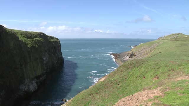 puffin population on island of skomer soars to highest level since wwii; wales: skomer: ext various of puffins / various of bird watchers and people... - war and conflict stock videos & royalty-free footage