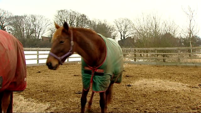 redwings horse sanctuary horse in enclosure - enclosure stock videos & royalty-free footage
