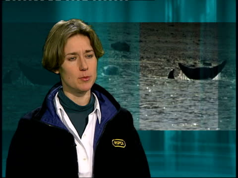 vídeos de stock e filmes b-roll de river thames whale dies int laila sadler interview sot we've seen rescuers do everything they could in professional manner / there was something... - cetáceo