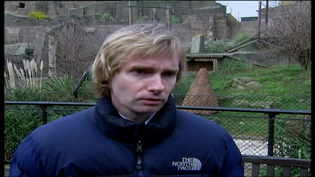 river thames whale reasons for death london zoo dr paul jepson interview sot the whale was dehydrated and couldn't feed properly - aquatic organism stock videos & royalty-free footage