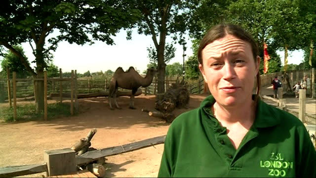 animals weighed at london zoo ext angela ryan interview sot - 秤点の映像素材/bロール