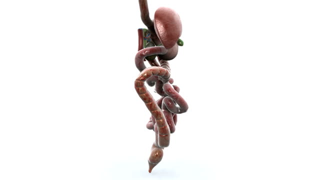 animated 360-degree view of the gastrointestinal system. - ileum stock videos & royalty-free footage