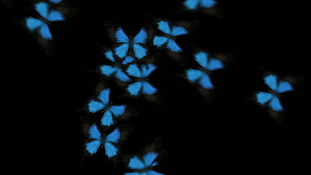 Animated Butterflies Fly Across - Blue (With Alpha Variations)