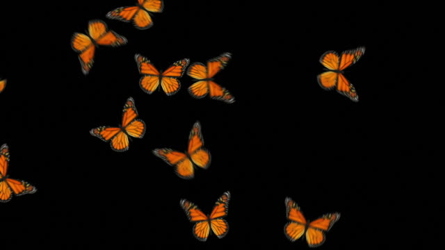 Animated Butterflies Fly In/Out - Orange Monarch (With Alpha Variations)
