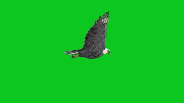 animated charcoal pencil drawn eagle flying on green screen loopable the concept of animal, wildlife, games, back to school, charcoal, drawing, short video, film, cartoon, alphabet, organic, sketch - special effect stock videos & royalty-free footage