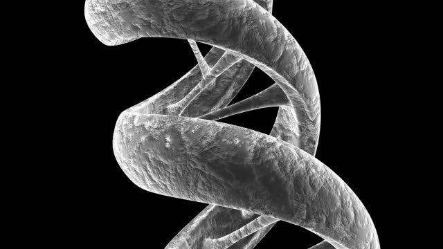 animated gray textured dna strand. - helix model stock videos and b-roll footage