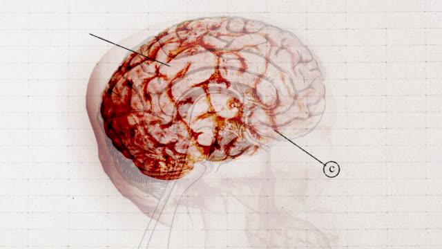 cgi, animated human brain - cerebellum bildbanksvideor och videomaterial från bakom kulisserna