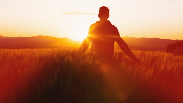 Animated picture with cinemagraph effect of a guy contemplating the sunset over the rural countryside with wheat fields in motion in Catalonia with nice sunset light.