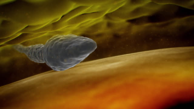 animated sequence showing a sperm successfully entering an egg and the egg creating a hard shell around itself to prevent further sperm from entering it. - menschliche fruchtbarkeit stock-videos und b-roll-filmmaterial