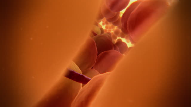 Animated sequence showing blood vessels in amongst fat cells underneath the surface of the skin.