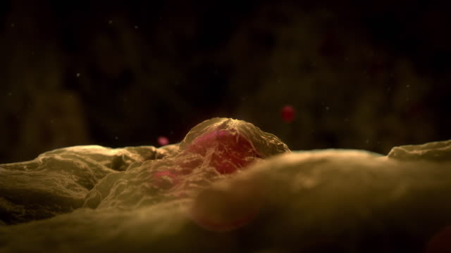 Animated sequence showing nurse cells producing new red blood cells.