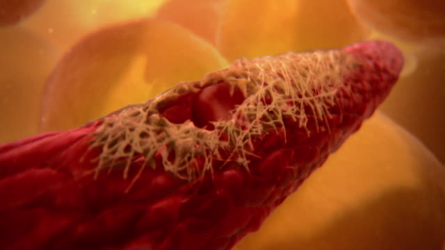 animated sequence showing platelets repairing a damaged blood vessel. - cellula ematica video stock e b–roll