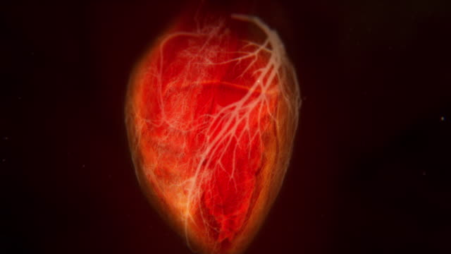 vídeos de stock, filmes e b-roll de animated sequence showing the heart pumping blood around the body. - coração humano