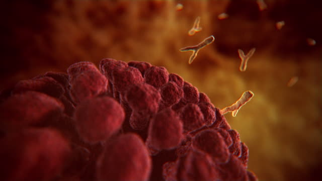 vídeos y material grabado en eventos de stock de animated sequences showing y shaped antibodies sticking to flu viruses during the body's fight against infection. - animación biomédica
