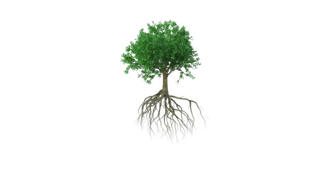 animation around a colored growing tree with roots - growth stock videos & royalty-free footage