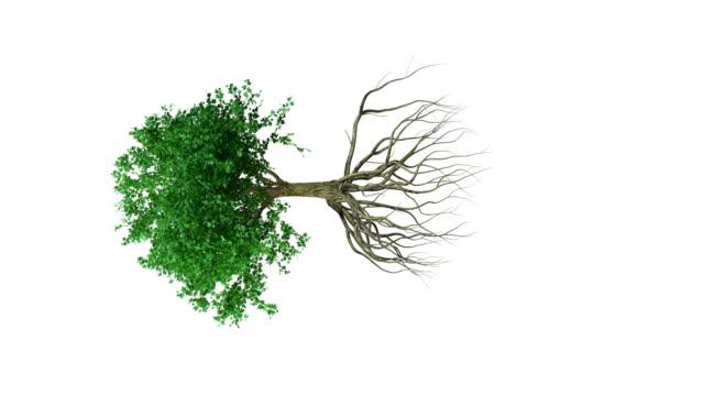animation around a colored growing tree with roots - root stock videos and b-roll footage